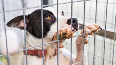 Cachorro na jaula