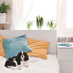 Cachorro na cama