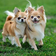 Cachorros juntos