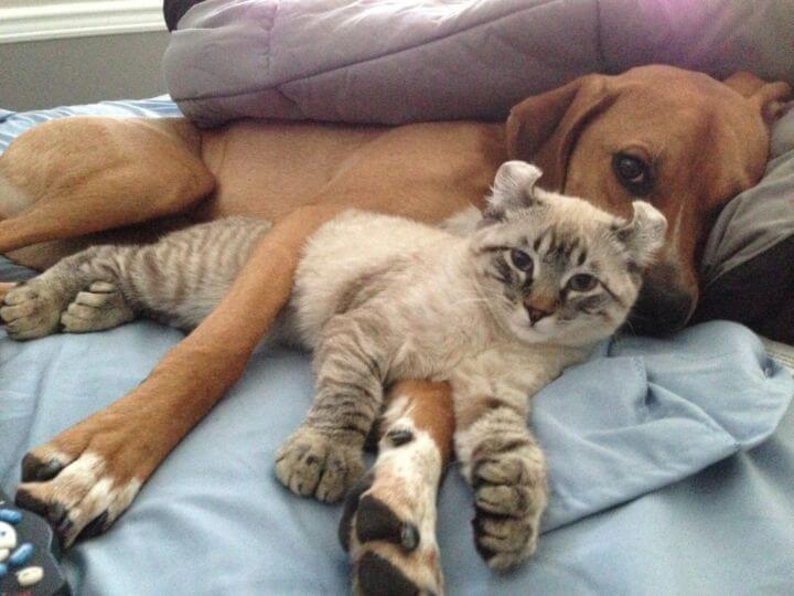 cao-gato-juntos