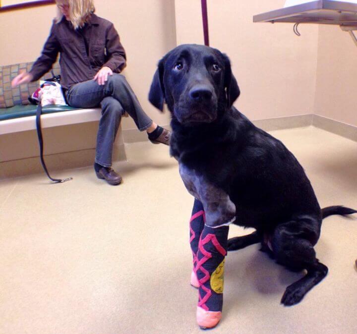 Câo com pata quebrada